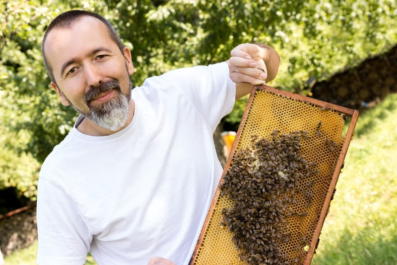 beekeeper collecting royal jelly from the hive
